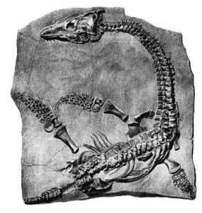plesiosaure2.jpg