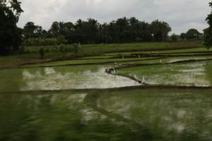 sri-lanka 0895 1500